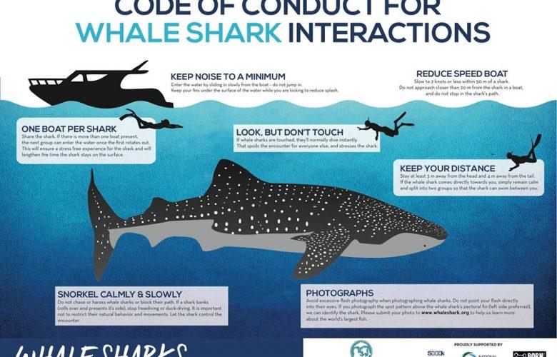 Etika Saat Berenang, Snorkling, Diving dan Beraktifitas Di Laut 1