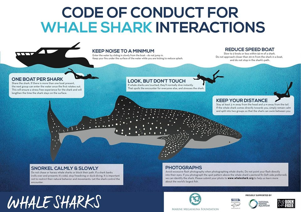 whale-shark-tour-guidlines-pic