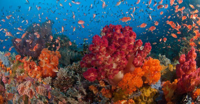 Dari Diver Teh Celup Sampai Ber-license 1