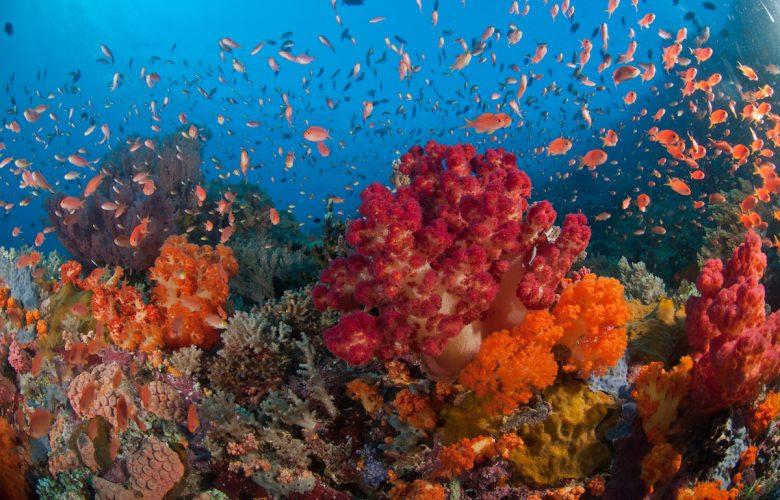 Dari Diver Teh Celup Sampai Ber-license 5